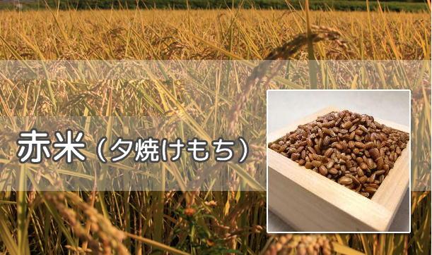赤米(古代米)