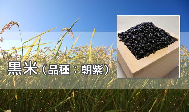 黒米(古代米)